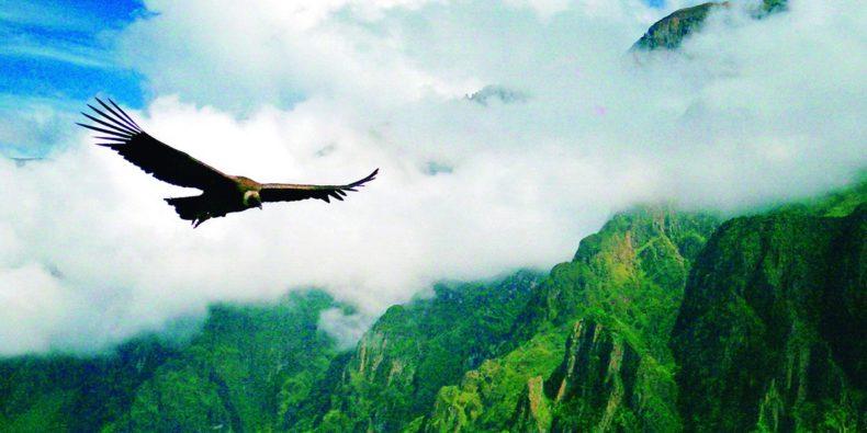 condor flying - 10 days in peru