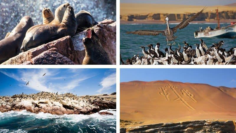 ballestas islands photo gallery