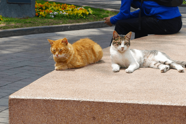 cats chilling out in kennedy park