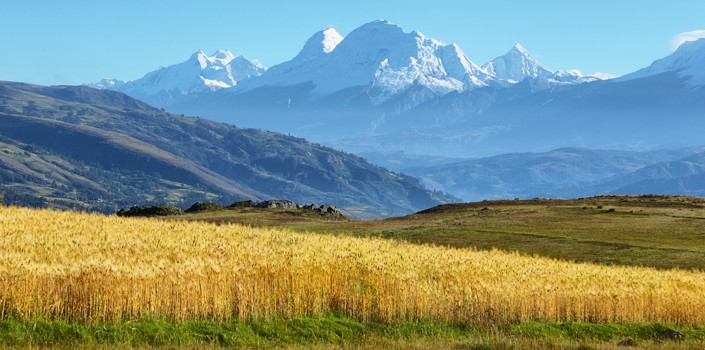 Beautiful landscape of snow-capped mountain and yellow field high in the Andes, Peru