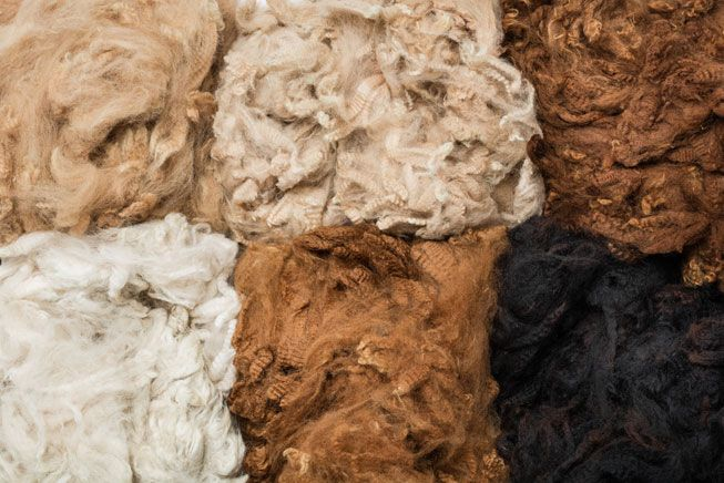 Alpaca wool - The difference between llama and alpaca