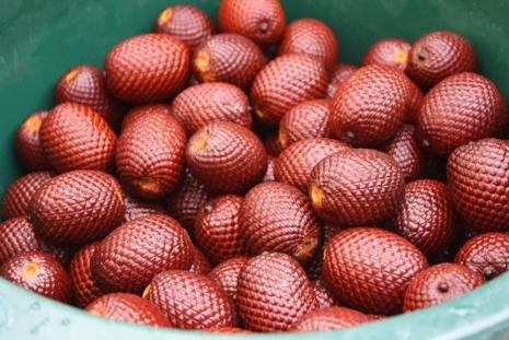 Peruvian fruits - Aguaje