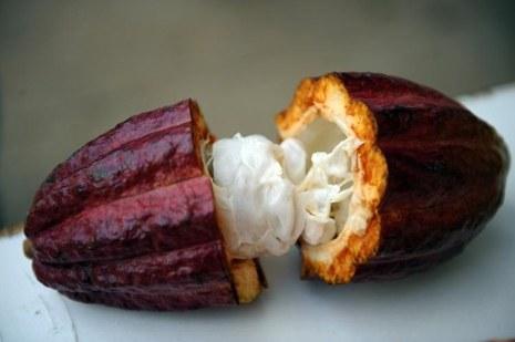 Frutas Peruanas - Cacao