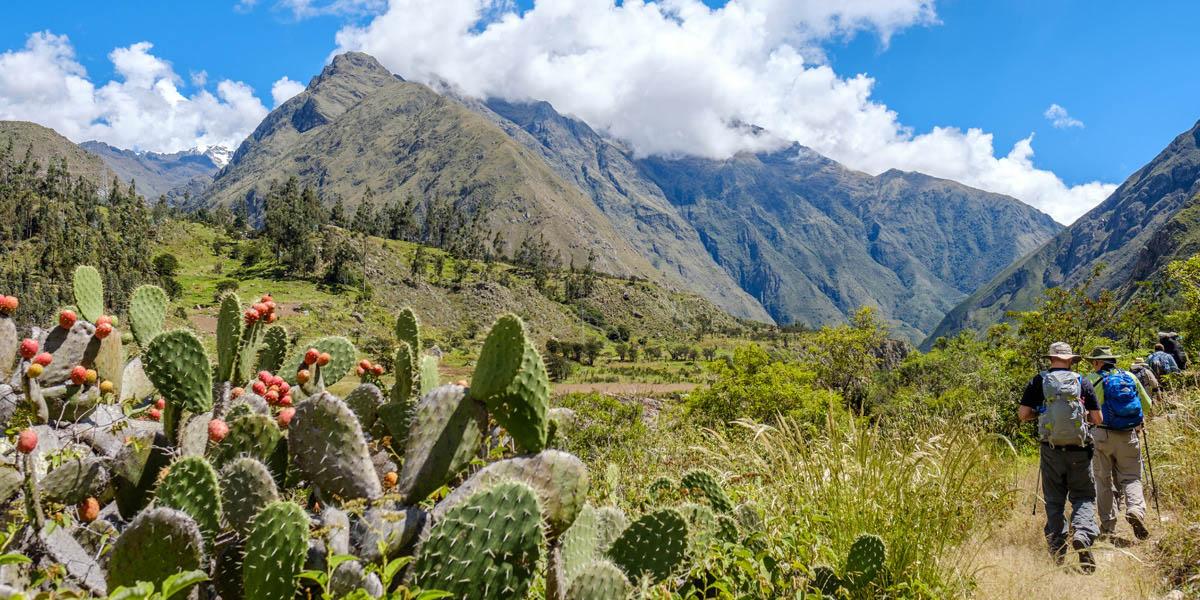 Un groupe de marcheurs sur les sentiers du Chemin de l'Inca (Inca Trail).