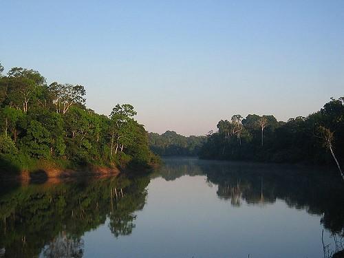 jungle-water