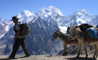 Man hiking with donkey and mule