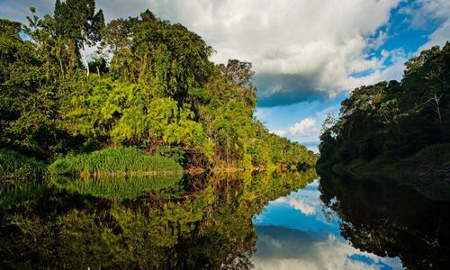 Pacaya Samiria National Reserve - Pacaya Samiria river in the Rainforest